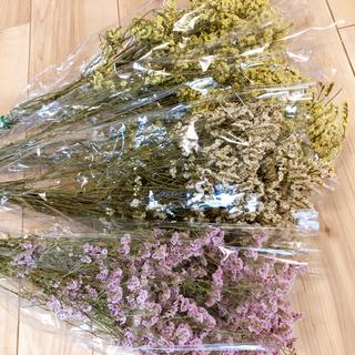 ドライフラワー ハイブリッドスターチス 花材 4種(ドライフラワー)