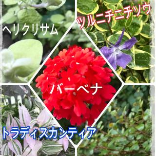 花苗 5種セット