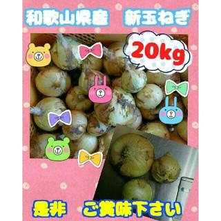 北海道北見産の新玉ねぎ20kg送料無料☆学校給食に卸すはずでした(>_<)(野菜)