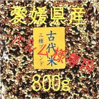 パルム様専用 古代米3種ブレンド 愛媛県産 800g(米/穀物)