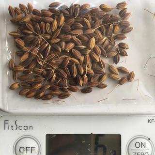 無農薬、赤米の種籾5グラム(米/穀物)