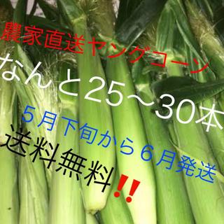農家直送ヤングコーンなんと25〜30本5月下旬から6月発送予定‼️値下げ‼️(野菜)