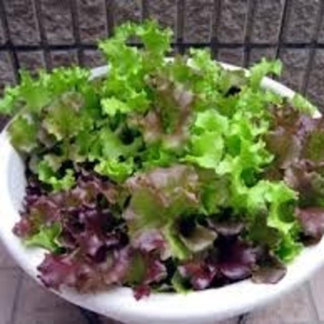 【すぐに何度でも収穫できるサラダ野菜の種6セット!】ベランダ、プランター 食品/飲料/酒の食品(野菜)の商品写真