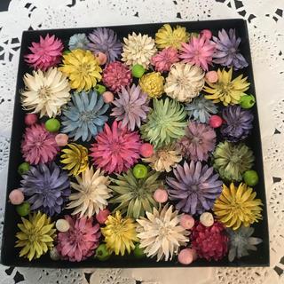 ドライフラワー 花材 チーゼルフラワー ボックス(ドライフラワー)
