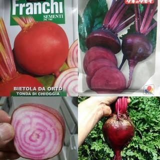イタリア野菜の種 ビーツ キオッジア&デトロイトダーク 20粒ずつ オマケ付き(野菜)
