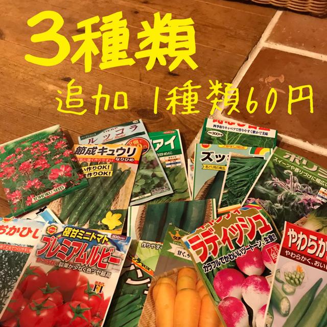 野菜の種 3種類 食品/飲料/酒の食品(野菜)の商品写真