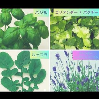種子(野菜)