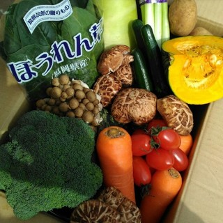 新鮮野菜70〜80サイズ8種類詰め合わせ 春野菜旬の美味しい九州産(野菜)