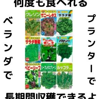 【すぐに何度でも収穫できるサラダ野菜の種9セット!】ベランダ、プランターで(野菜)