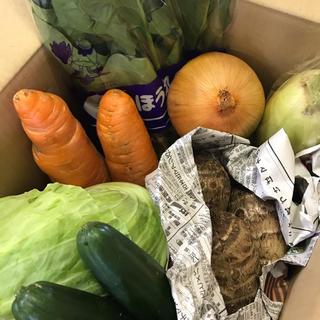 岡山市場 正規品 野菜詰め合わせセット(野菜)