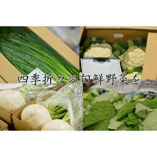 八百屋が届けるお任せ野菜たまごセット【大T】(野菜)