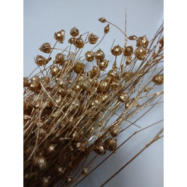 リノ  ゴールド  大地農園 ハンドメイドのフラワー/ガーデン(ドライフラワー)の商品写真