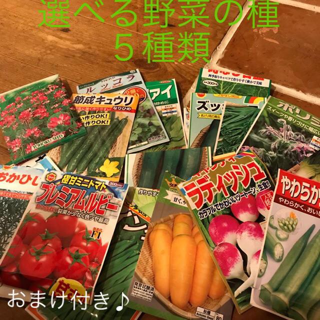 野菜の種 5種類 食品/飲料/酒の食品(野菜)の商品写真