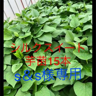シルク15本はるか15紫芋5本ナルト金時5本(野菜)