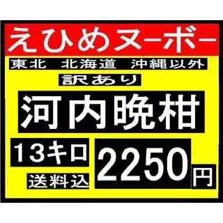 わか大2  えひめヌーボーの 訳あり 河内晩柑 13キロ(フルーツ)