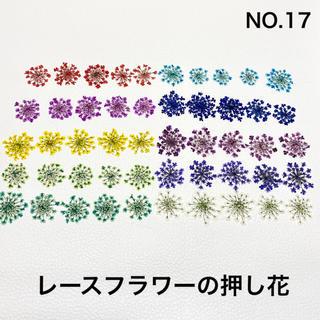 【50枚】レースフラワー の押し花(No.17)(ドライフラワー)
