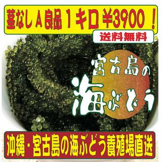沖縄 宮古島直送!海ぶどう 1キロ 茎なし A良品でこの値段は今だけ!(野菜)
