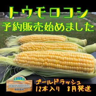 nonobaba様専用 とうもろこし 24本入り(野菜)