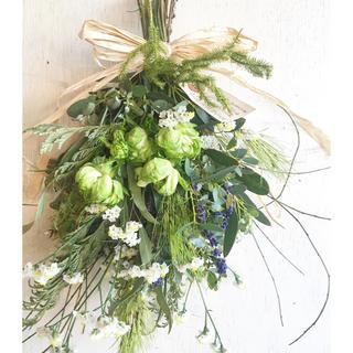 Miss green dried flower〜ミスグリーン製作スワッグ(ドライフラワー)