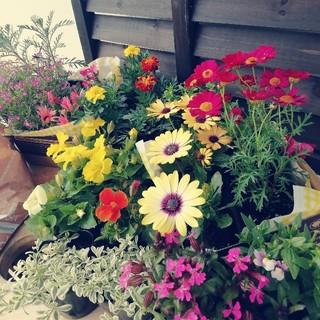 新鮮!産地直送★春から開花の花22苗★送料込み(その他)