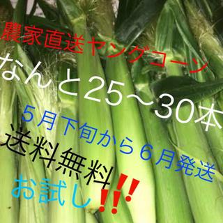 農家直送ヤングコーンなんと25〜30本5月下旬から6月発送予定‼️今だけ値下げ(野菜)