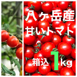 八ヶ岳(長野県) 産 ミニトマト 箱込約1kg  味濃いめ 免疫力UPに(野菜)