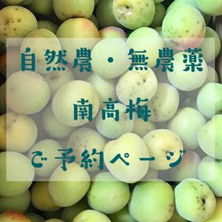「自然農・無農薬」南高梅 青梅 和歌山県産(フルーツ)