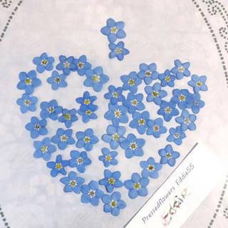 綺麗な押し花○忘れな草45枚 ワスレナグサ 、わすれな草、ドライフラワー(ドライフラワー)