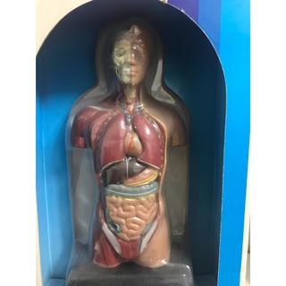 人体模型 インテリア♪(模型/プラモデル)