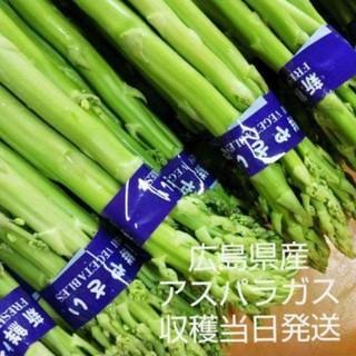 広島県産 朝採れアスパラガス 規格外品500グラム(野菜)