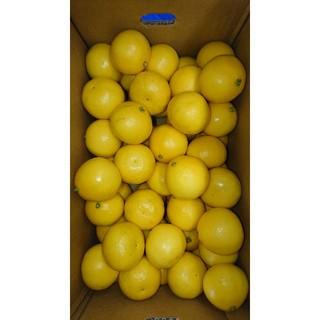 温室 小夏 2Sサイズ 5kg 高知県産 ご家庭用(フルーツ)