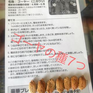 ゴーヤ 種(ニガウリ) 7粒(野菜)