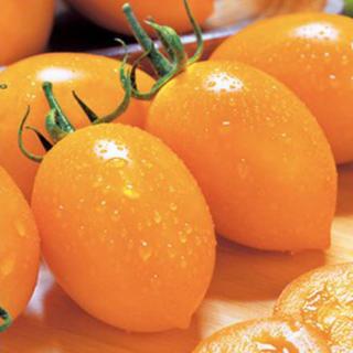 高級 ゴールド中大玉トマト クックゴールド 苗(野菜)