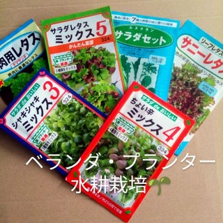 女性にオススメ ベランダ、プランター◎ 春まきの野菜の種 6種類セット小分け(野菜)