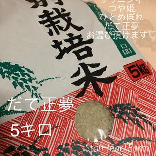 🌟【だて正夢5キロ】史上最強🌟もっちもちツヤツヤ🌙(米/穀物)