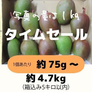 [セール:橙5]約4.7キロ グリーンマンゴー 青マンゴー 加工用 マンゴー(フルーツ)