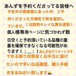 杏  長野県森産  6月14日以降収穫開始予定 予約終了  7/1収穫終了(フルーツ)