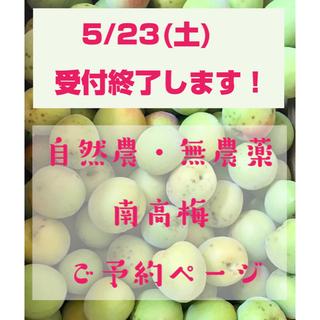 5/23(土)受付終了!!自然農・無農薬 南高梅 青梅 和歌山県産(フルーツ)