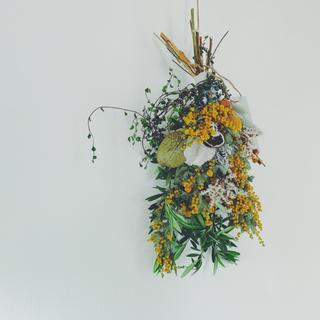 テトラゴナ クラスペディア セネシオ スターチスのミモザスワッグO(ドライフラワー)