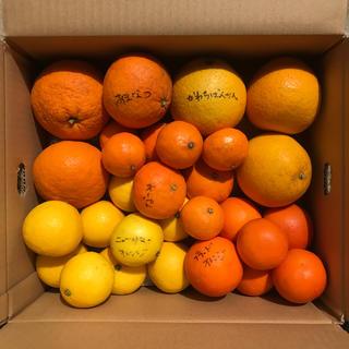 柑橘 詰め合わせ 訳あり(フルーツ)