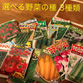 aye aye 様  野菜の種 3種類(野菜)