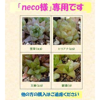 多肉植物 【0228】  ハオルチア4種セット ⑥  他(その他)
