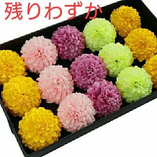 (652) 選べる4色 ソープフラワー ピンポン菊 花材 ハンドメイド 5個(その他)