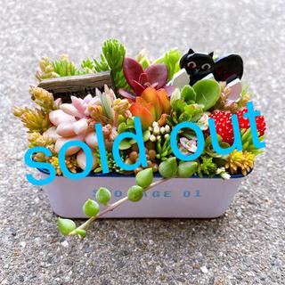 ★★モリモリ❤️豪華★寄せ植え★ブリキ缶★このまま飾れます★多肉植物(その他)