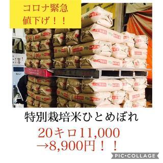 緊急値下げセール!!残りわずか!!宮城県産特別栽培ひとめぼれ20キロ(米/穀物)
