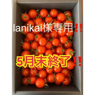 白米と同梱 1kg ☆キャロルセブン☆(野菜)