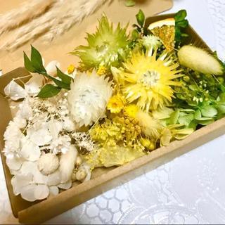 簡単‼︎すぐ出来る‼︎3色シルバーデージー *花材ドライフラワー 花材セット(ドライフラワー)