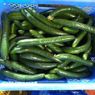 きゅうり5キロ朝どり新鮮野菜C品です(野菜)
