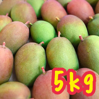 宮崎県産 グリーンマンゴー 5kg(フルーツ)