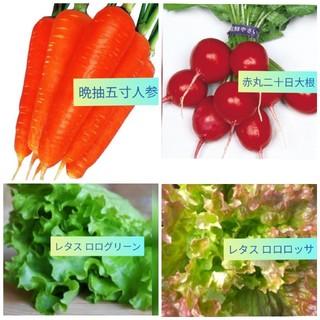 野菜 3(野菜)